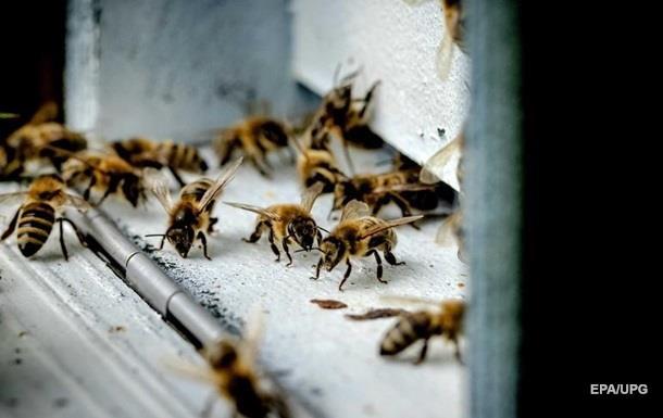 В Украине из-за ядохимикатов погибли десятки тысяч пчелосемей