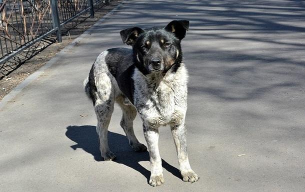 На Луганщині засудили чоловіка за жорстоке поводження із собакою