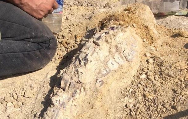 Останки кита віком десять мільйонів років знайшли в Криму