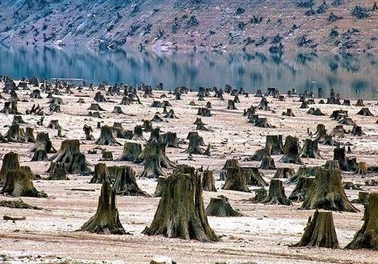 Міністр екології не може вплинути на нелегальну вирубку лісів