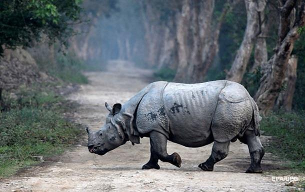 Гонитву носорога за туристами зняли на відео