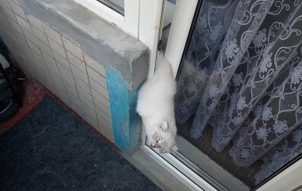 В Днепре котенок застрял в двери балкона и умер