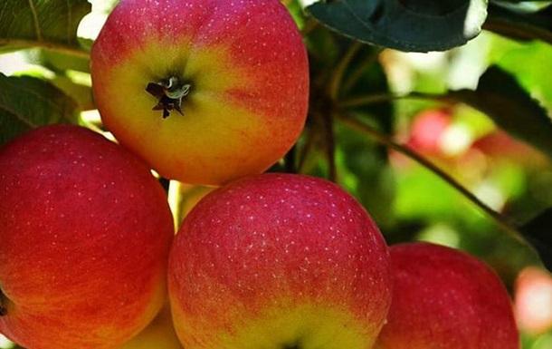 Яблочный спас 2019