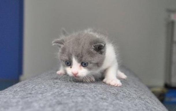 У Китаї з явився перший клонований кіт