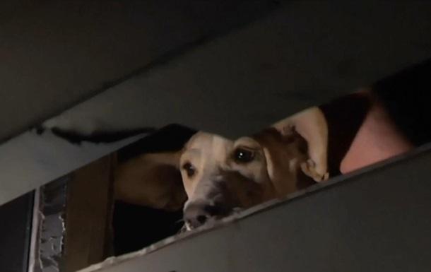 Во Львове на полдня в лифте застряли четверо людей и собака