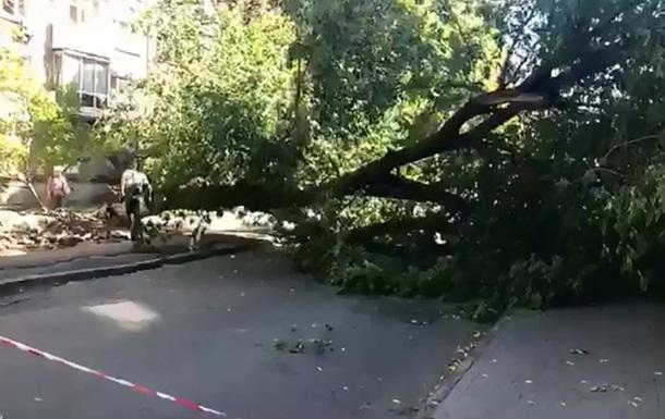 У Києві величезне дерево впало на жінку