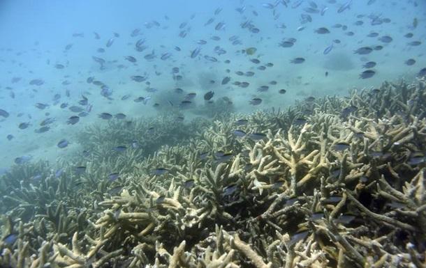 Ученые ухудшили прогноз для Большого Барьерного рифа