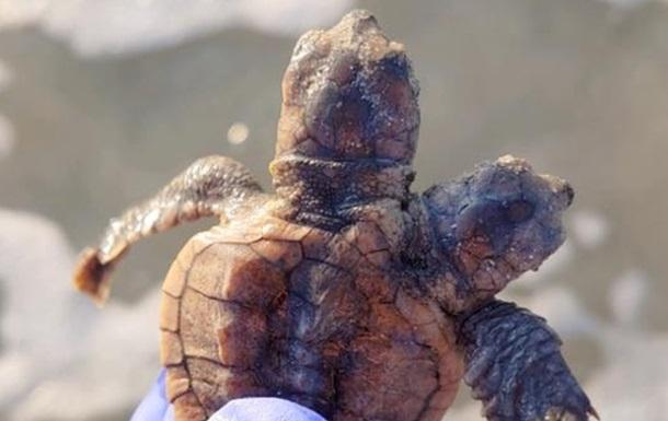 В США обнаружили редкую двухголовую черепаху