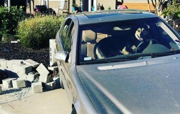 Собака за рулем попала в ДТП в США