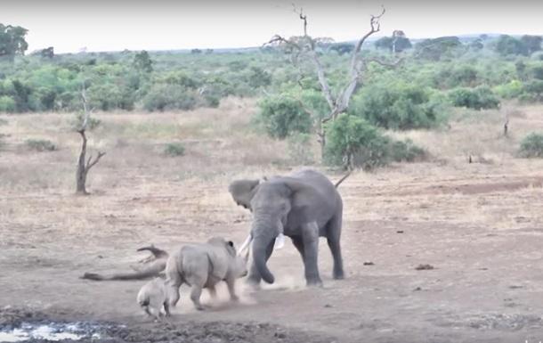 Бійка слона і носорога в ПАР потрапила на відео