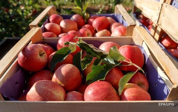 В ЄС дозволили імпорт українських овочів і фруктів