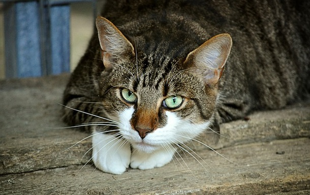 В Виннице судили мужчину за убийство кошки