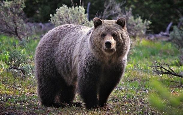 Медведь в США пробрался в гостиницу и усныл на раковине