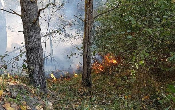 Под Житомиром лесные пожары охватили 100 гектаров