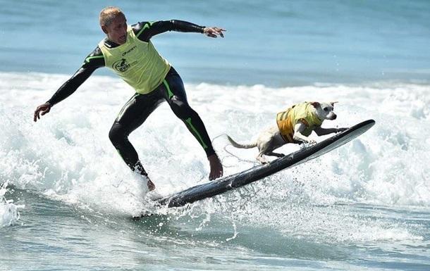 В США на фестивале выступили собаки-серфингисты