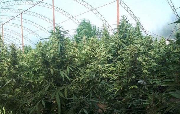 Конопля и семьи цитаты марихуане