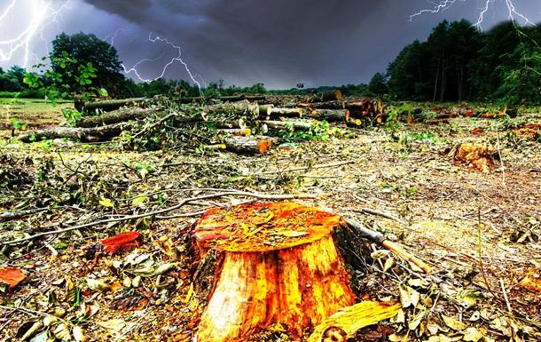 На Землі щороку вирубують ліси площею з Британію