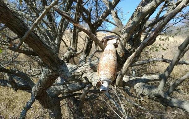 У Криму на дереві знайшли бомбу часів Другої світової війни