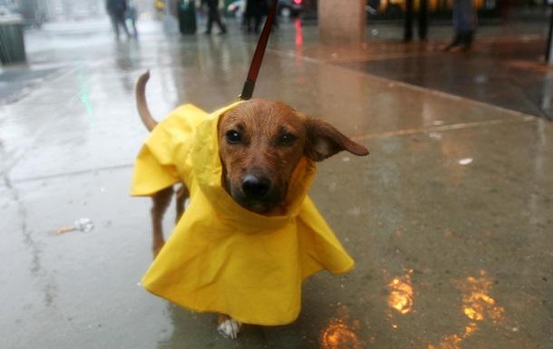 В Украину на следующей неделе придут дожди