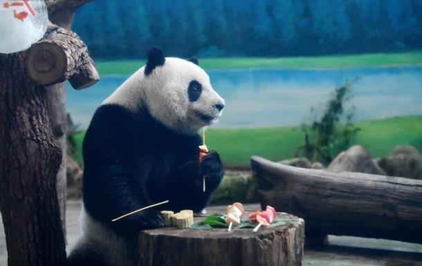 У зоопарку Тайваню панд годували місячними пряниками