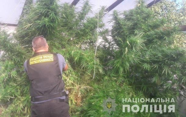 Под Днепром у мужчины нашли 46 кустов конопли и 12 кг марихуаны