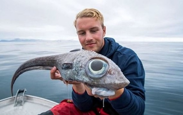 Норвежский рыбак поймал редкую рыбу - европейскую химеру