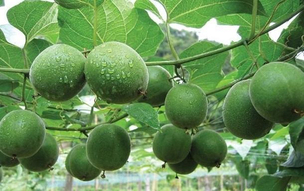Вчені назвали фрукт, що уповільнює старіння