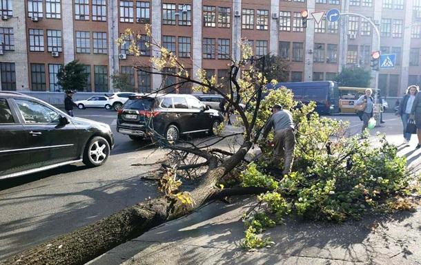 У Києві сильний вітер повалив десятки дерев