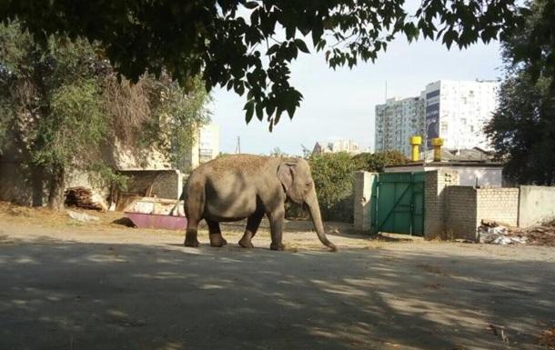 Вулицями Харкова розгулював слон
