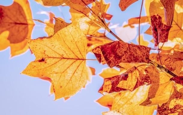 Синоптики розповіли, якою буде погода в жовтні