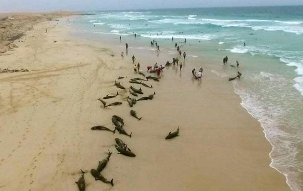 На курорті дельфіни масово викинулися на берег
