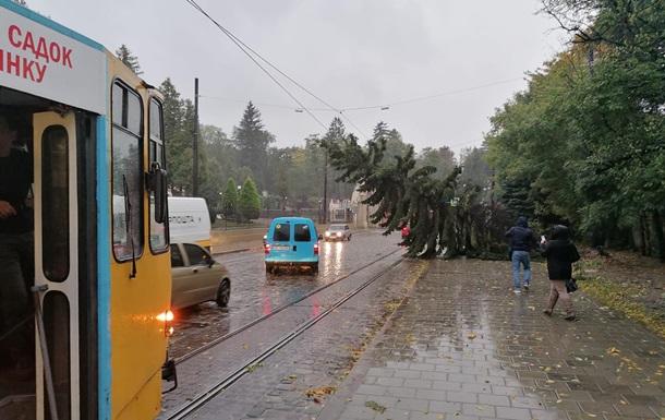 У Львові буревій повалив дерева та обірвав електродроти
