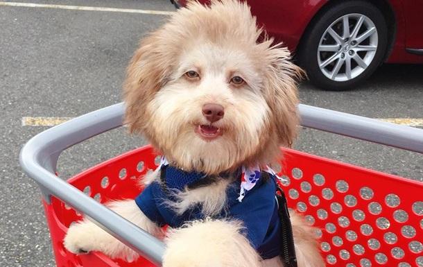 В сети нашли пса с  человеческим лицом