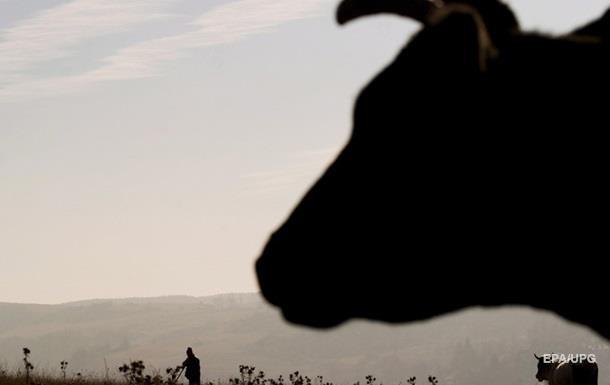 Україна домовилася про експорт молока в Саудівську Аравію
