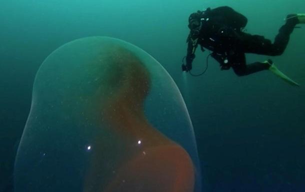 В океане сняли захватывающее редкое явление