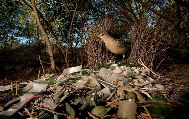 Ученые оценили реальное время распада пластика в природе
