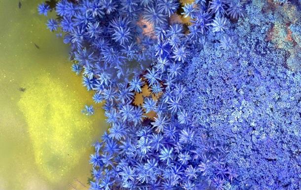 Геологическая служба США показала Землю в инфракрасном цвете