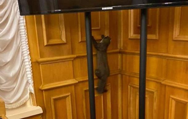 У будівлю Ради потрапила хижа тварина