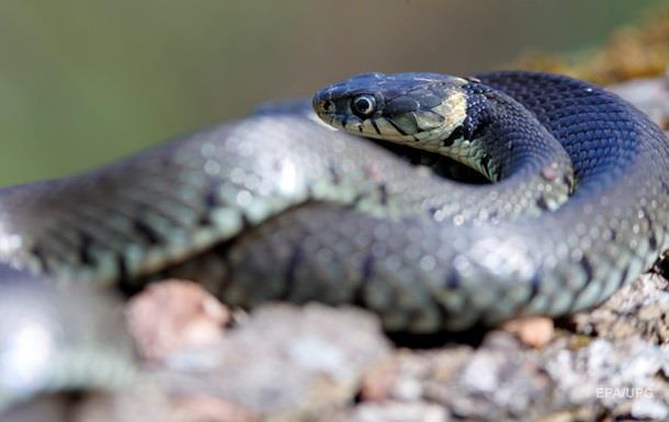 Шершень прогнал змею и попал на видео