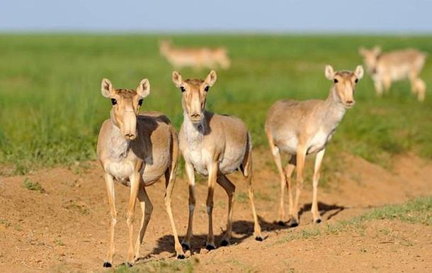 Украина будет экспортировать в Китай антилоп