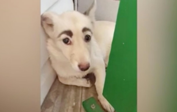 Собака с бровями по кличке Фрида стала популярной в Сети