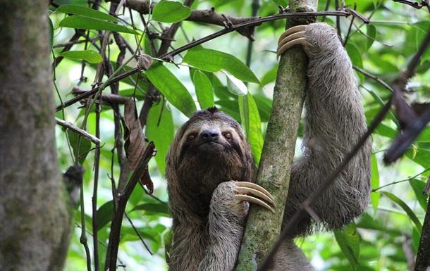 Туристам в Коста-Ріці заборонять робити селфі з тваринами