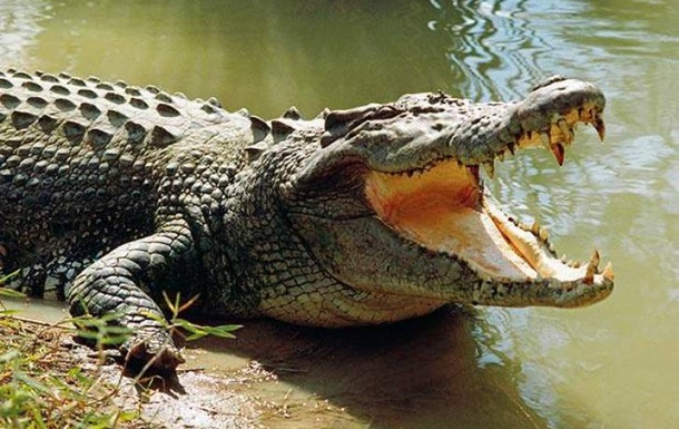 Девочка оседлала крокодила и спасла подругу от гибели