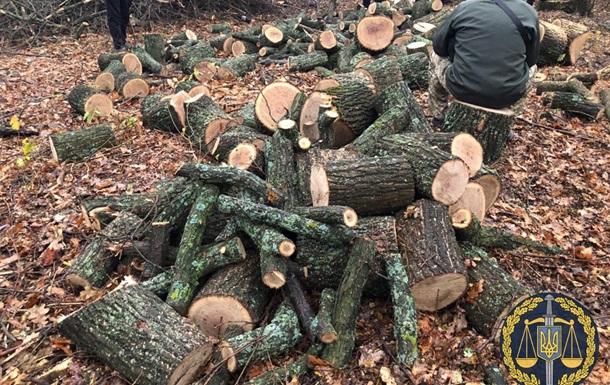 В Харьковской области задержали банду  черных лесорубов