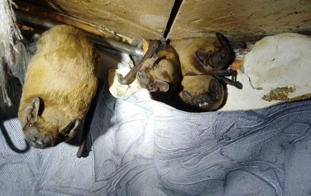 У Києві в квартиру залетіли 120 кажанів