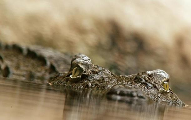 Рыбак отбился от напавшего на него двухметрового крокодила