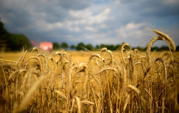Україна відновила рекорд з урожаю зернових