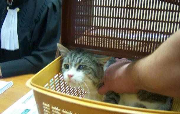 Кота-наркокур єра, який утік, підмінили на суді