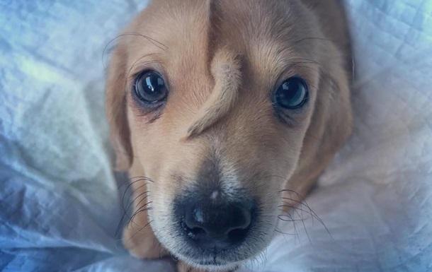 В США нашли щенка с забавной мутацией