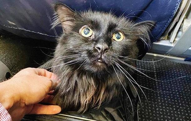 Пропавшего кота нашли через пять лет на другом конце страны